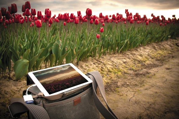 Ipad field tulip field