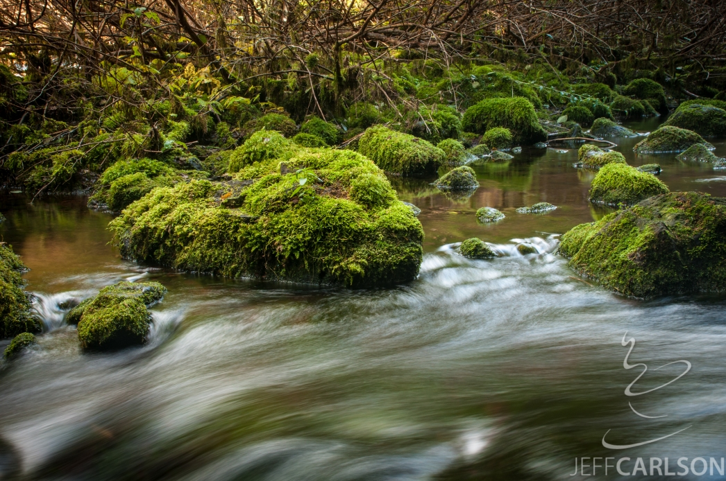 Mossy McKenzie River