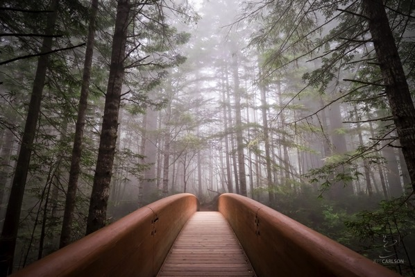 Redwoods Bridge Noiseless final
