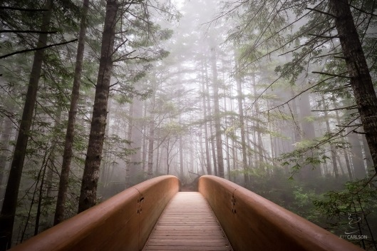 Light falls through the fog onto the bridge at the Lady Bird Johnson Grove of redwood trees. The bridge crosses the highway from the parking lot.
