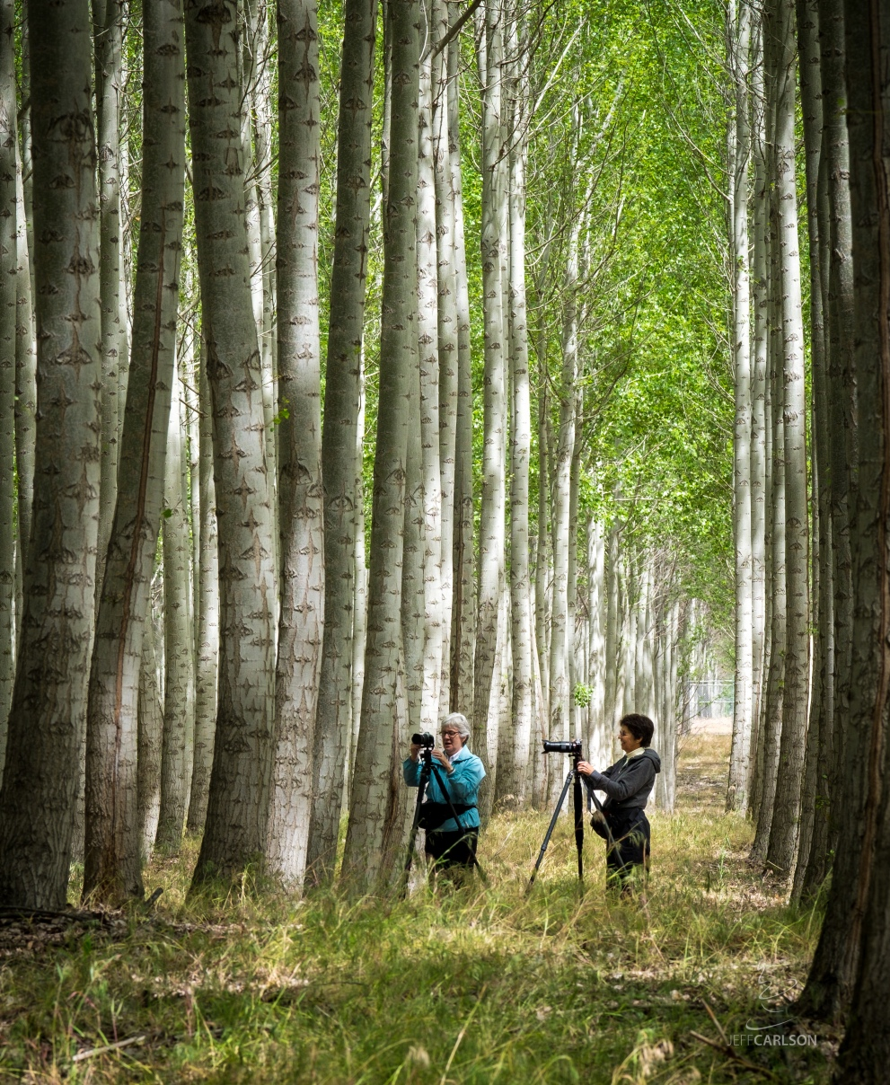 Tree_Farm_Photographers