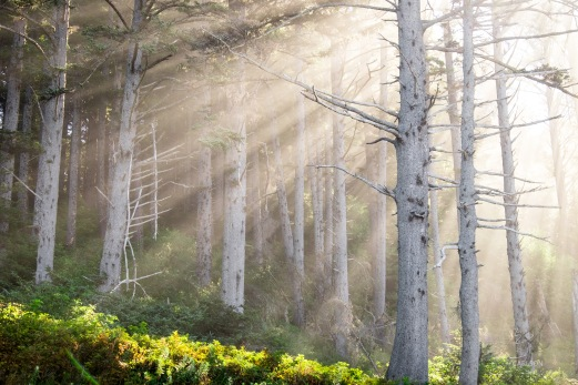 A light fog on the coast created fantastic shafts of light through the trees at Second Beach.