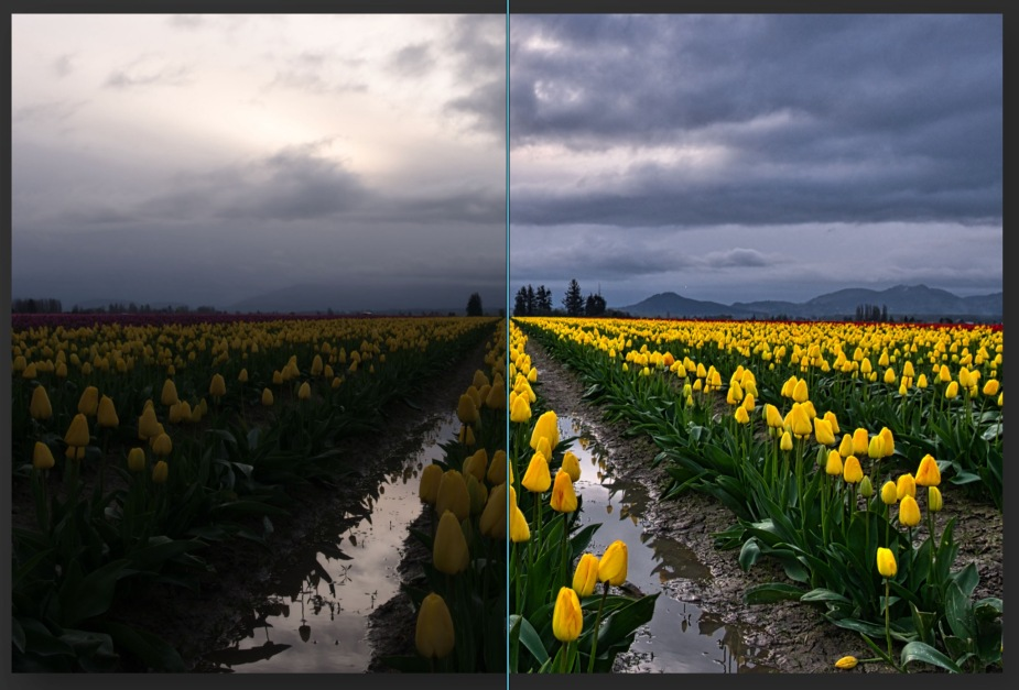 luminar-ai-tulips-before-after_2048px